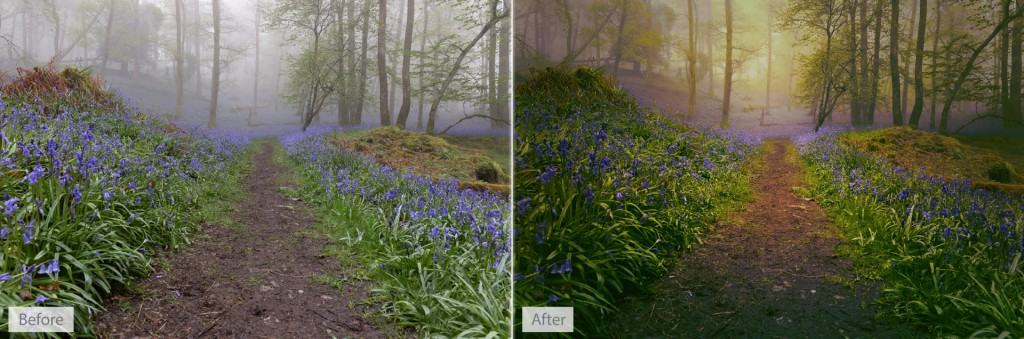 Woodland before and after