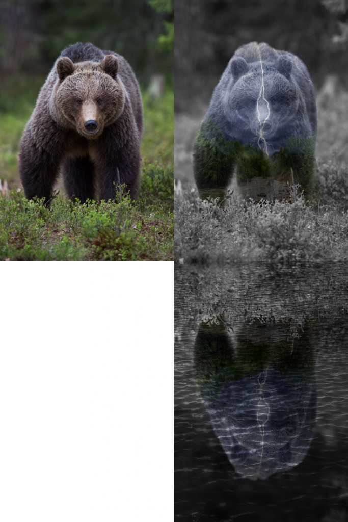 bear before and after
