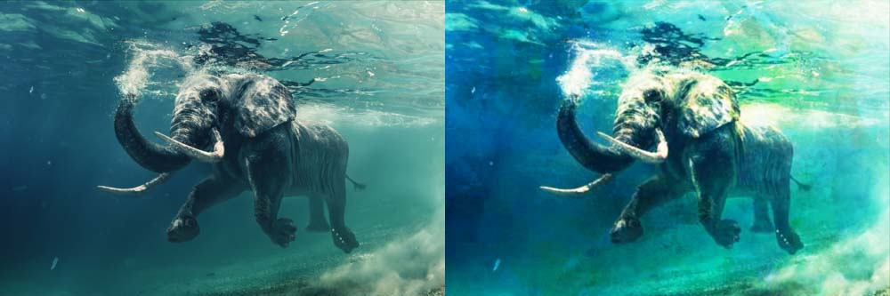 elephant before and after