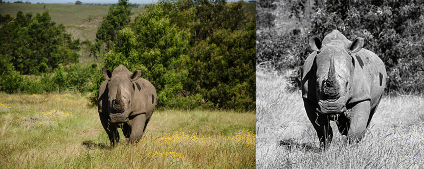 rhino before and after