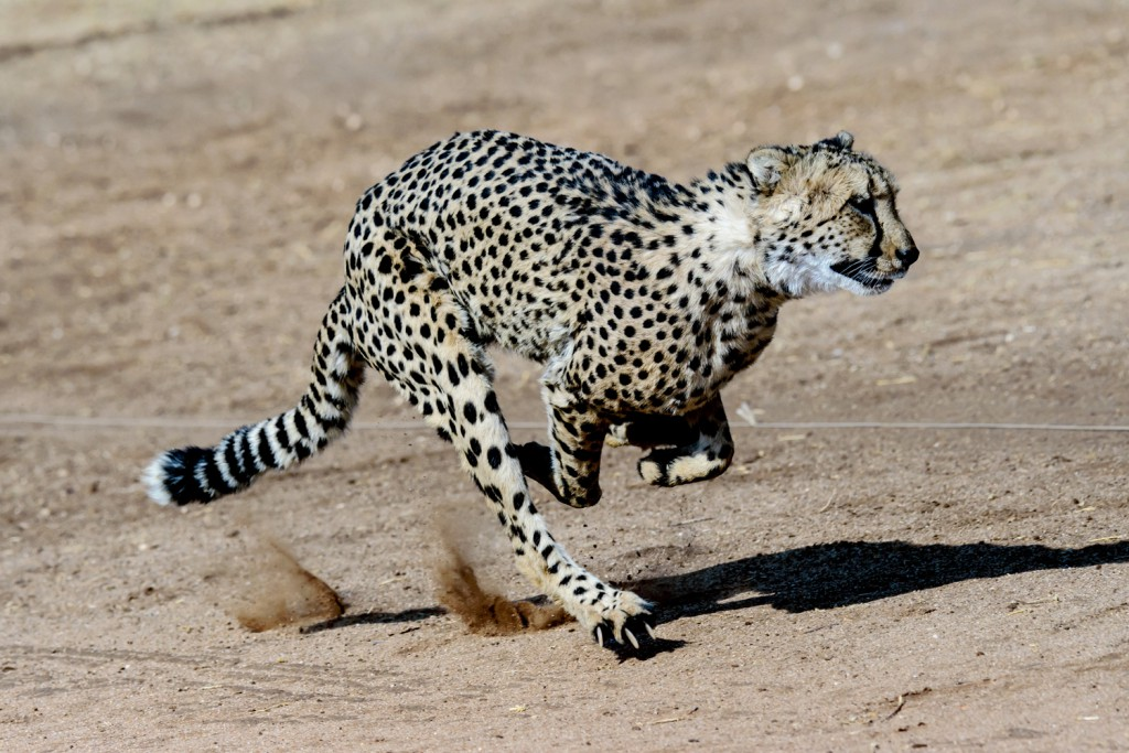 safarishutterstock_516002737lp